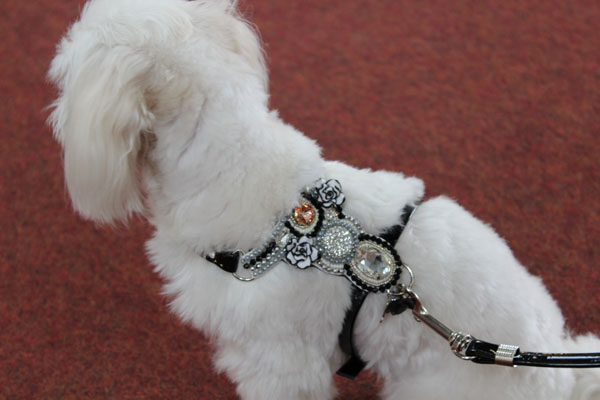 DOG&DOLLS HARNESS